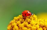瑞士超市将上架昆虫为食材的食品 你敢吃吗?