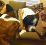 他们家的宠物太大了