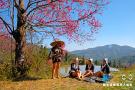 哈尼山寨樱花与梯田美景