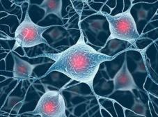 美国科学家尝试用寨卡病毒治疗脑癌