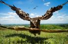 鸟类摄影 震撼至极