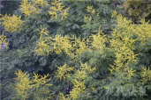 南京入秋后多种花盛开 未来