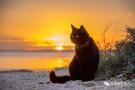 和前女友的猫去旅行