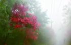 """本溪平顶山现""""雾枫""""奇观 山顶红枫将持续到11月份"""