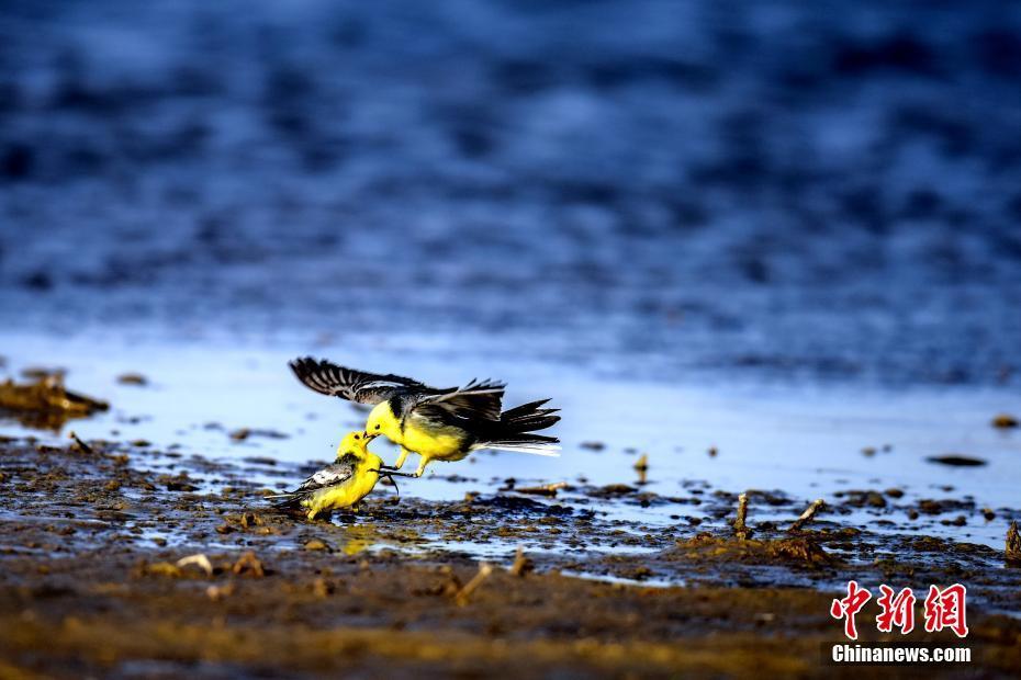 中国最大盐湖颜值高