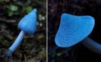 蓝瘦香菇家族新成员