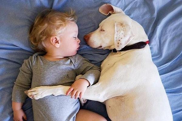 狗狗与小主人相拥