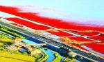 """盘锦开始""""退养还滩"""" 实施滨海湿地修复工程"""