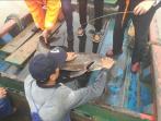 普陀虾峙渔民捕到31公斤野生中华鲟,当即将其放生