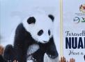 """熊猫""""暖暖""""回国"""