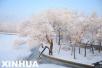 烟台发布道路结冰黄色预警 30日下午到夜间仍有雪