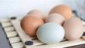 颜色不一样的鸡蛋是否营养价值也不同?
