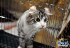 小猫困高架桥两年 老人每天甩食救助