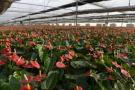 厉害了!山东花卉市场和花农数量均居全国首位