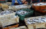 辽宁去年水产品对外贸易总量同比增长19.2%