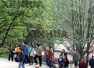 """""""国际森林日"""":重庆130处森林旅游地免费开放"""