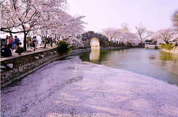 清明假期北京市属公园赏花热 总游客量达190万人次