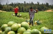 你知道济南哪里产西瓜吗?