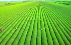 山东力推绿色循环高效农业项目 每个项目中央财补约2000万