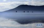 好消息!11月8日起三门峡天鹅湖景区免除门票
