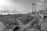 """""""無處安放""""的共用單車 攝影師尋訪30城記錄單車過剩"""
