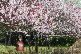 第四季仰韶诗词大会来了:盛世天时 喝彩中国