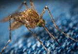 夏季蚊虫肆虐,驱蚊喷雾哪个牌子好呢?