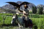 """""""可爱的中国""""之柯尔克孜族:这里的人们和猎鹰有个约定"""