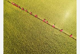 今年我国粮食产量有望第5年稳定在1.3万亿斤以上