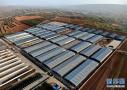 河南洛宁:产业扶贫促发展