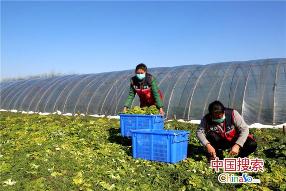 河南潢川县这个村的蔬菜草莓销得俏