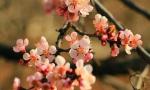 秦皇岛及周边春季踏青赏花攻略出炉!还不收藏
