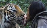 厲害了!男子養老虎當寵物