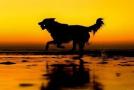 狗狗也有艺术照!英国年度狗狗摄影师获奖作品发布