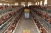 徐州鸡蛋价格快速上涨 养殖户扭亏为盈