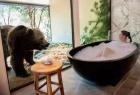 """世界最""""兽性""""酒店你敢住吗?棕熊看你洗澡,狮子陪你吃饭..."""