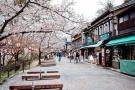 """通讯:在日本小城探寻旅游""""井喷""""的奥秘"""