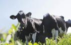推进京津奶业发展向河北转移