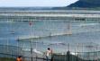 苏州将拆除域内全部太湖养殖围网,不会影响今年大闸蟹产量