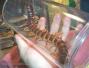 济南海关截获偷渡活体动物 有巨大蜘蛛和红巨人蜈蚣