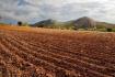 拓展耕地来源广开资金渠道 山东多举措落实耕地占补平衡