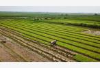 农村新兴产业崛起 返乡工作收入不低于外出打工