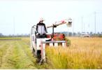 南京市水稻秋收启动,亩产增收200斤以上