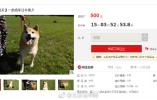 法院500元起拍卖柴犬 狗主人现身:身在国外 宠物移民复杂