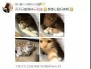 """浙大硕士毕业论文写""""云吸猫""""称其为""""精神鸦片"""",网友炸锅"""