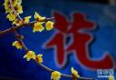 河南鄢陵:寒冬花枝俏