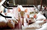 河北省开展非洲猪瘟等动物疫病防控集中大消毒活动