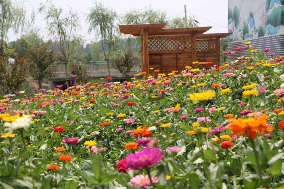 河南郏县:产业旺 乡村美